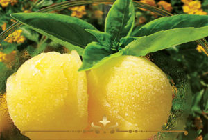 Cool Citrus Basil Scented Candles