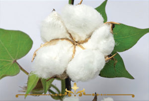 Cotton Blossom Scented Candles