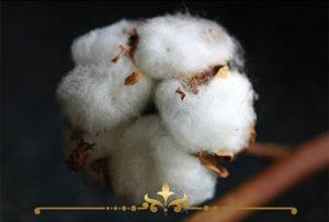 Cotton Bouquet Scented Candles