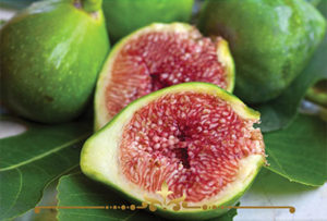 Fig Scented Candles